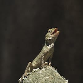 this is mine. My forest, my pole. by Roger van Zandvoort - Animals Reptiles