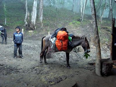 小马倌和驮游客行李的骡子