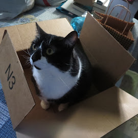 Cats Love a Box by Marcia Taylor - Novices Only Pets (  )