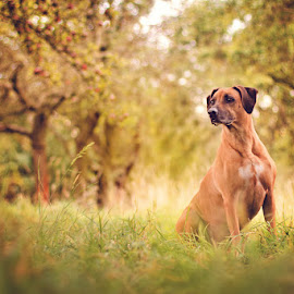 on the watch  by Lukáš Lang - Animals - Dogs Portraits