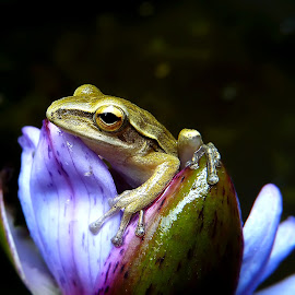 sad little frog by Hendrata Yoga Surya - Instagram & Mobile Android