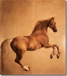 Scarlet Quince Whistlejacket