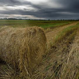 by Kelvin Shutter - Landscapes Prairies, Meadows & Fields