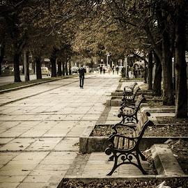 by Aleksandra Papova - City,  Street & Park  City Parks ( public, bench, furniture, object )