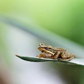 by Hamsut        . - Animals Amphibians