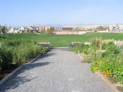 rowdy park field