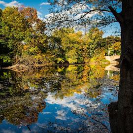 by Michael Last - Landscapes Waterscapes