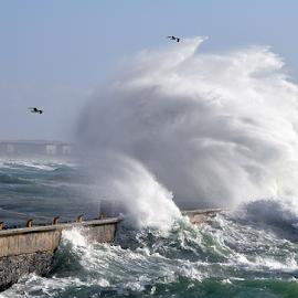 Wave breaking by Lennon Fletcher - Landscapes Waterscapes ( water, wave breaking, harbor wall, rough sea, wave, sea, rough, large wave,  )