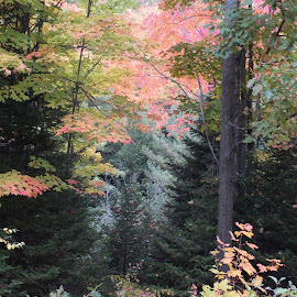 Fall Hues by Deb Hancock - Landscapes Forests