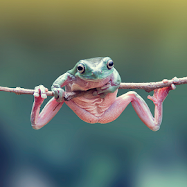 hold on by Robert  Fly - Animals Amphibians ( frog, green, amphibian, frogs, amphibians )