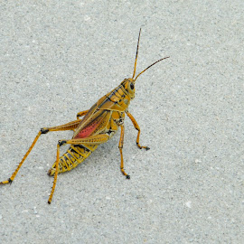 Holy Jimmy Crickets by Donna Probasco - Novices Only Wildlife (  )