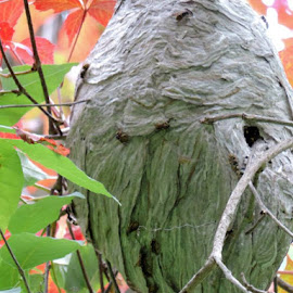A working hive by Susanne Swayze - Nature Up Close Hives & Nests