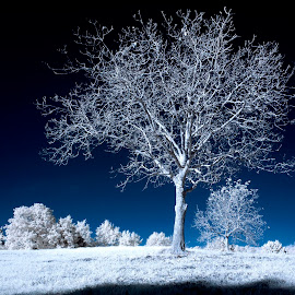 by Lorenzo Di Candia - Nature Up Close Trees & Bushes ( ir, autumn, infrared, nikon d70, di candia lorenzo, infrarosso,  )