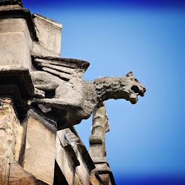 York Gargoyle by Ian Jukes - Buildings & Architecture Architectural Detail ( roof, uk, decorative, gargoyle, york )