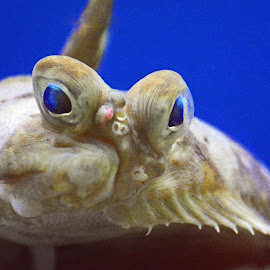 Here's Looking At You by Patti North - Animals Sea Creatures