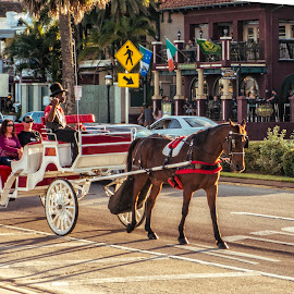 Horse & Buggy Tour by Sandy Friedkin - Transportation Other ( buggy, florida, horse, st. augustine, tour,  )