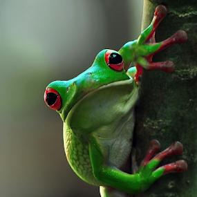by Eko Adiyanto - Animals Amphibians