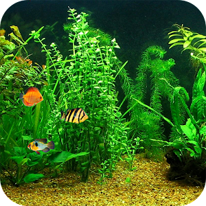 App fish tank hd live wallpaper apk for kindle fire for Live fish games