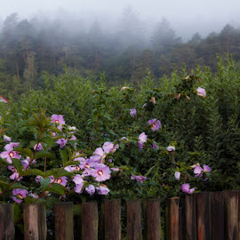 Behind a fence by Ruda Stančík - Nature Up Close Gardens & Produce ( fence, fog, flowers )