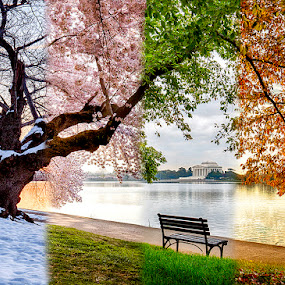 4 Seasons of DC by Kevin Miller - City,  Street & Park  Historic Districts ( water, dc, basin, memorial, tidal, usa, spring, washington, winter, seasons, jeffereson, fall, snow, summer, year, d.c. )