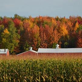 Fall by Lisa Rust Wrege - Landscapes Prairies, Meadows & Fields