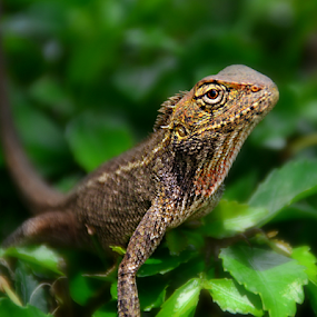 by Keple MN - Animals Reptiles