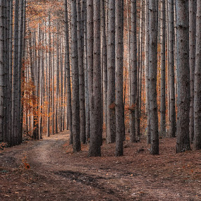 by Elvis Dorencec - Landscapes Forests