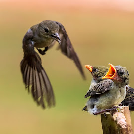 Freeze the moment by Roy Husada - Animals Birds