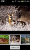 Screenshot of HD Deer Wallpapers