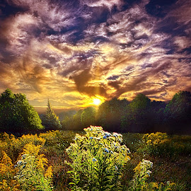 First Light by Phil Koch - Landscapes Prairies, Meadows & Fields ( vertical, photograph, fine art, travel, yellow, love, sky, tree, nature, autumn, flowers, flower, orange, twilight, agriculture, horizon, portrait, environment, dawn, serene, trees, floral, wisconsin, natural light, ray, landscape, phil koch, sun, photography, horizons, clouds, office, park, green, scenic, morning, shadows, wild flowers, field, red, color, blue, sunset, peace, fall, meadow, landscapephotography, summer, beam, earth, sunrise, landscapes, mist )