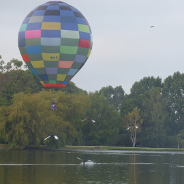 Hot Air Balloon and Birds by Mark Dickinson - Novices Only Sports