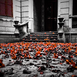 Falling yard by Renato Marques - Instagram & Mobile iPhone ( kapov, yard, fall, flowers,  )