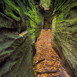 Narrow Crevice by Kenneth Keifer - Landscapes Caves & Formations ( cuyahoga, corridor, sandstone, stone, rock, valley, fracture, leaves, landscape, crevasse, chasm, ohio, nature, autumn, passage, foliage, trail, crevice, path, mossy, slot, cranny, formation, rift, ravine, crack, green, verdant, fissure, canyon, forest, scenic, woods, maple, walls, national park, narrow, hidden, fall, secret, virginia kendall, trees, split, cleft, ledges, hike, gap )