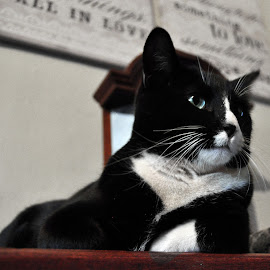 Cute Cassie by Mone Ehlers - Animals - Cats Portraits ( cats, animals, still life, pets, cute )