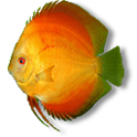 Tropical fish Lianliankan icon