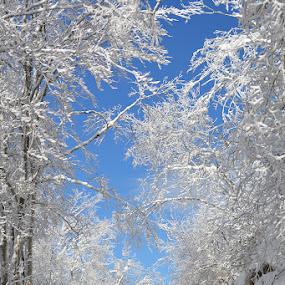 My first snow by Olsi Belishta - Landscapes Mountains & Hills ( mountain, dajt, snow, charlie, albania, german shepherd )