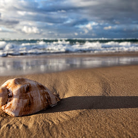 The Shell by Steve Badger - Landscapes Beaches ( water, sand, shell, single, beach,  )