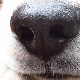 Sniffing Out Food by Janet Hobbs - Animals - Dogs Puppies