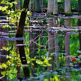 Flooded by Lori Kulik - Nature Up Close Trees & Bushes ( water, reflection, trees, woods )