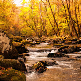 October in the Smokies by Lowell Griffith - Landscapes Waterscapes ( stream, rocks, fall color,  )