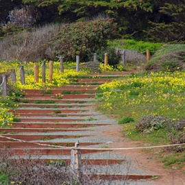 Stairway to? by Richard Graham - City,  Street & Park  City Parks ( stairs, california central coast park, nature, path, flowers )