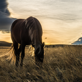 Alone time by Richard Horst - Animals Horses ( horses, breakfast, montana, morning )