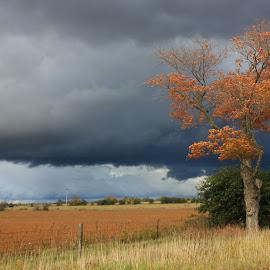 Dark Sky by Sharon Bull - Nature Up Close Trees & Bushes