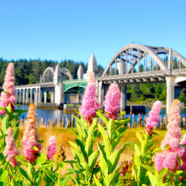 Oregon Beauty  by Jordan M Newington - Novices Only Flowers & Plants ( oregon, florence, bridge, flowers )