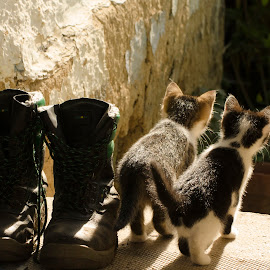 Curious kittens by Aris Canis von Furcsoara - Animals - Cats Kittens ( cats, cat, kittens playing, puss and boots, puss in boots, , baby, young, animal )