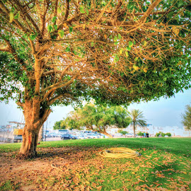 Airport Park by Naser Eid - Landscapes Prairies, Meadows & Fields ( tree, park, grass, autumn, green, fall, yellow, garden )