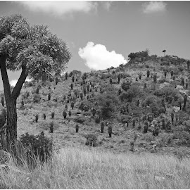 African Bushveld by Dirk Luus - Landscapes Prairies, Meadows & Fields ( hills, tree, african, meadows, landscape, black and white, b&w )