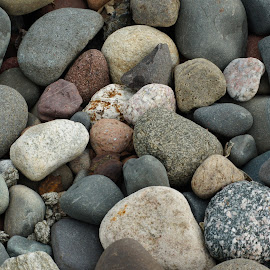 Hard as a Rock by Susan Fries - Nature Up Close Rock & Stone ( closeup images, pattern, closeup image, beach, rocks )
