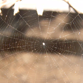 Spider's web by Praveen Kumar - Nature Up Close Webs ( roof, village, web, close up, spider web )