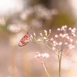Butterfly by Ziz Abd Aziz - Nature Up Close Leaves & Grasses